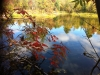 leaves at lake