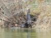 otter-family